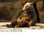 Купить «brown sitting brunette hot sit», фото № 8092554, снято 17 августа 2018 г. (c) PantherMedia / Фотобанк Лори