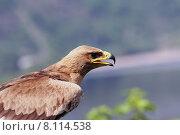 Купить «portrait animal bird birds predator», фото № 8114538, снято 21 марта 2019 г. (c) PantherMedia / Фотобанк Лори