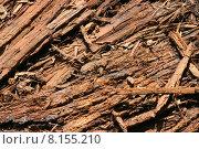 Купить «forest bark decompose decayed floor», фото № 8155210, снято 21 марта 2019 г. (c) PantherMedia / Фотобанк Лори