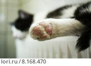 Купить «pink cat sleep sleeping paw», фото № 8168470, снято 19 октября 2019 г. (c) PantherMedia / Фотобанк Лори