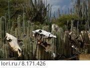 Купить «animal plant head park western», фото № 8171426, снято 25 марта 2019 г. (c) PantherMedia / Фотобанк Лори
