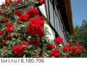 Купить «building plant flower house garden», фото № 8180706, снято 19 сентября 2018 г. (c) PantherMedia / Фотобанк Лори