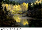 Купить «water yellow tree reflection forest», фото № 8183014, снято 17 июля 2019 г. (c) PantherMedia / Фотобанк Лори