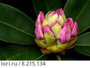 Купить «beautiful green spring blossom bloom», фото № 8215134, снято 24 января 2019 г. (c) PantherMedia / Фотобанк Лори
