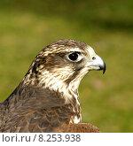 Купить «portrait close up eye bird», фото № 8253938, снято 22 марта 2019 г. (c) PantherMedia / Фотобанк Лори