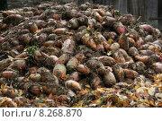 Купить «beet turnip vulgaris beets beta», фото № 8268870, снято 15 декабря 2018 г. (c) PantherMedia / Фотобанк Лори