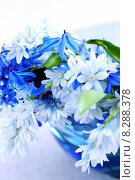 Купить «First spring flowers », фото № 8288378, снято 25 июня 2019 г. (c) PantherMedia / Фотобанк Лори