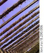 Купить «blue sky plant park spring», фото № 8290006, снято 19 сентября 2018 г. (c) PantherMedia / Фотобанк Лори