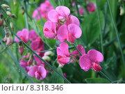 Купить «plant blossom bloom drop drops», фото № 8318346, снято 16 июля 2018 г. (c) PantherMedia / Фотобанк Лори