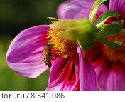 Купить «close up plant flower macro», фото № 8341086, снято 6 июля 2020 г. (c) PantherMedia / Фотобанк Лори