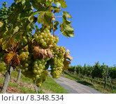 Купить «caucasian european vintage blank wine», фото № 8348534, снято 24 января 2019 г. (c) PantherMedia / Фотобанк Лори