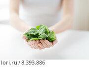 Купить «close up of woman hands holding spinach», фото № 8393886, снято 28 апреля 2015 г. (c) Syda Productions / Фотобанк Лори