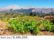 Купить «Молодая виноградная лоза. Родос, Греция», фото № 8446094, снято 24 августа 2019 г. (c) Andrei Nekrassov / Фотобанк Лори