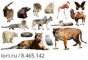 Купить «Tiger and other asian fauna. Isolated on white», фото № 8465142, снято 17 января 2020 г. (c) Яков Филимонов / Фотобанк Лори