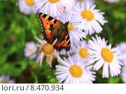 Бабочка на цветах. Стоковое фото, фотограф Аня Шумкова / Фотобанк Лори