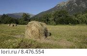 Купить «Скошенное и свернутое в рулон сено на лесной поляне в горах Кавказа», эксклюзивный видеоролик № 8476554, снято 21 июля 2015 г. (c) Алексей Бок / Фотобанк Лори