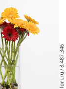 Купить «red yellow plant flower flowers», фото № 8487346, снято 15 декабря 2018 г. (c) PantherMedia / Фотобанк Лори