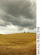 Купить «Dry field in alentejo with trees.», фото № 8492514, снято 17 октября 2018 г. (c) PantherMedia / Фотобанк Лори
