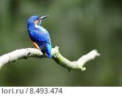 Купить «nature blue orange turquoise disposition», фото № 8493474, снято 24 мая 2019 г. (c) PantherMedia / Фотобанк Лори