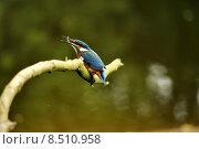 Купить «nature blue orange turquoise disposition», фото № 8510958, снято 24 мая 2019 г. (c) PantherMedia / Фотобанк Лори