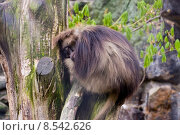 Купить «animal wilderness sleep sleeping backentaschenaffen», фото № 8542626, снято 19 октября 2019 г. (c) PantherMedia / Фотобанк Лори
