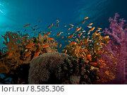 Купить «coral, ocean and fish», фото № 8585306, снято 20 марта 2019 г. (c) PantherMedia / Фотобанк Лори
