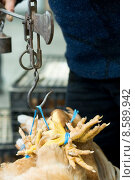 Купить «Sale of chickens», фото № 8589942, снято 20 мая 2019 г. (c) PantherMedia / Фотобанк Лори