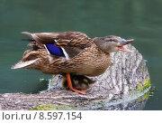 Купить «duck water child family small», фото № 8597154, снято 19 января 2020 г. (c) PantherMedia / Фотобанк Лори
