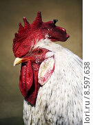 Купить «caucasian portrait red european blank», фото № 8597638, снято 22 июля 2019 г. (c) PantherMedia / Фотобанк Лори