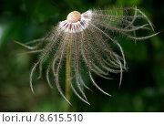 Купить «plant flower blossom bloom flourish», фото № 8615510, снято 19 августа 2018 г. (c) PantherMedia / Фотобанк Лори