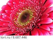 Купить «nature plant flower blossom wellness», фото № 8687446, снято 15 декабря 2018 г. (c) PantherMedia / Фотобанк Лори