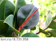 Купить «close up macro leaves foliage», фото № 8731958, снято 24 февраля 2020 г. (c) PantherMedia / Фотобанк Лори
