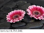Купить «black plant flower pink still», фото № 8751046, снято 15 декабря 2018 г. (c) PantherMedia / Фотобанк Лори