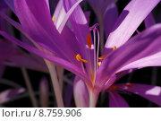 Купить «nature plant flower autumn fall», фото № 8759906, снято 20 марта 2019 г. (c) PantherMedia / Фотобанк Лори