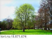 Купить «nature sky light tree bright», фото № 8871674, снято 19 марта 2019 г. (c) PantherMedia / Фотобанк Лори