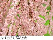 Купить «tree plant bush shrub franz», фото № 8923766, снято 23 апреля 2019 г. (c) PantherMedia / Фотобанк Лори