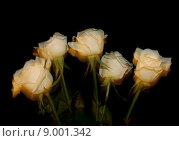 Розы, запечатленные со следом движения, на черном фоне. Стоковое фото, фотограф Кристина Саймон / Фотобанк Лори