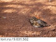 bird birds bobolinks sparrow domesticus. Стоковое фото, фотограф Martina Berg / PantherMedia / Фотобанк Лори
