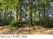 Купить «nature forest woods root green», фото № 9081366, снято 5 июля 2020 г. (c) PantherMedia / Фотобанк Лори