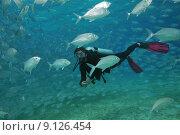 Купить «woman fishes diver mackerel makrelenschwarm», фото № 9126454, снято 27 мая 2019 г. (c) PantherMedia / Фотобанк Лори