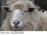 pet pets livestock wool sheep. Стоковое фото, фотограф Martina Berg / PantherMedia / Фотобанк Лори
