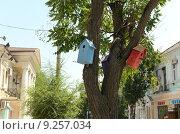 Купить «Скворечники на дереве в Евпатории», фото № 9257034, снято 9 июля 2015 г. (c) Ивашков Александр / Фотобанк Лори