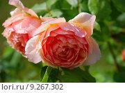 Купить «plant flower orange garden flora», фото № 9267302, снято 20 августа 2018 г. (c) PantherMedia / Фотобанк Лори