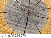 Купить «mark trunk kernel firewood splint», фото № 9294270, снято 24 сентября 2018 г. (c) PantherMedia / Фотобанк Лори