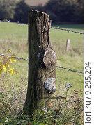 Купить «pole braid lichens plait holzpfahl», фото № 9295294, снято 21 августа 2019 г. (c) PantherMedia / Фотобанк Лори