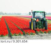 Купить «tractor on the tulip field, Netherlands», фото № 9301654, снято 26 марта 2019 г. (c) PantherMedia / Фотобанк Лори