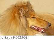 Купить «young animal brown brunette pet», фото № 9302662, снято 17 февраля 2020 г. (c) PantherMedia / Фотобанк Лори