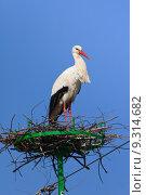 Купить «stork in the nest», фото № 9314682, снято 20 января 2020 г. (c) PantherMedia / Фотобанк Лори