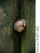 Купить «sleep sleeping snail stealthy edible», фото № 9421362, снято 23 марта 2019 г. (c) PantherMedia / Фотобанк Лори