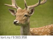 Купить «nature head wild animals hunting», фото № 9503958, снято 23 марта 2019 г. (c) PantherMedia / Фотобанк Лори
